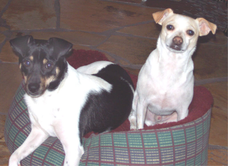 Doggie Pals, Petey and Buddy